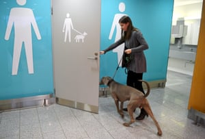 Vantaa, Finland A Weimaraner goes into a pet relief area at the Helsinki International Airpot in Vantaa. The pet toilet has been designed with dogs in mind, but other pets are also welcome
