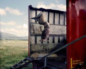 Susie Steel, 'Woman of Steel', Circus Gerbola, Ireland, 2017.