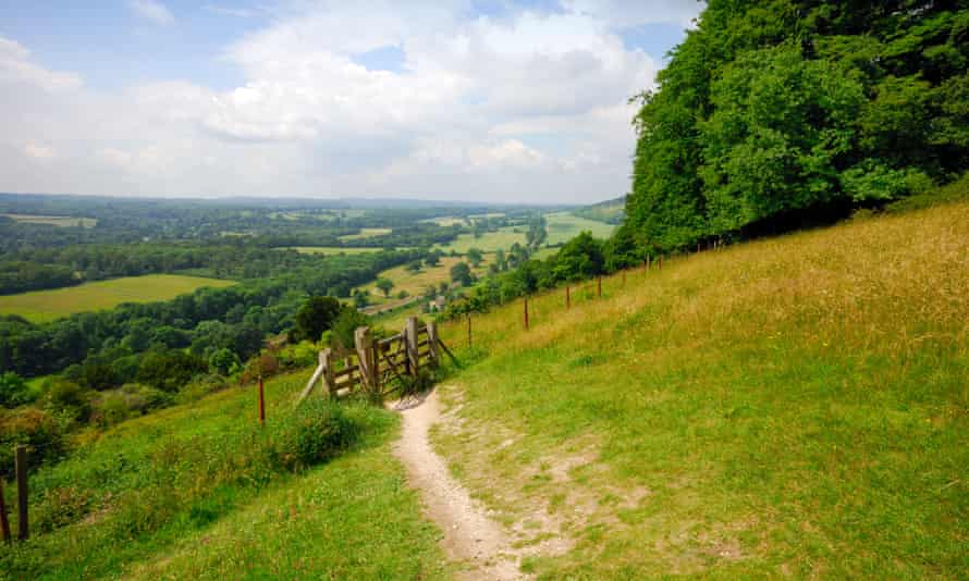 A path across the North Downs, near Dorking, Surrey.