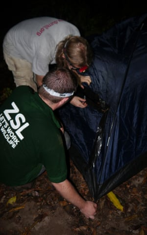 Setting up the soft release tent for Montserrat's last two mountain chicken frogs.