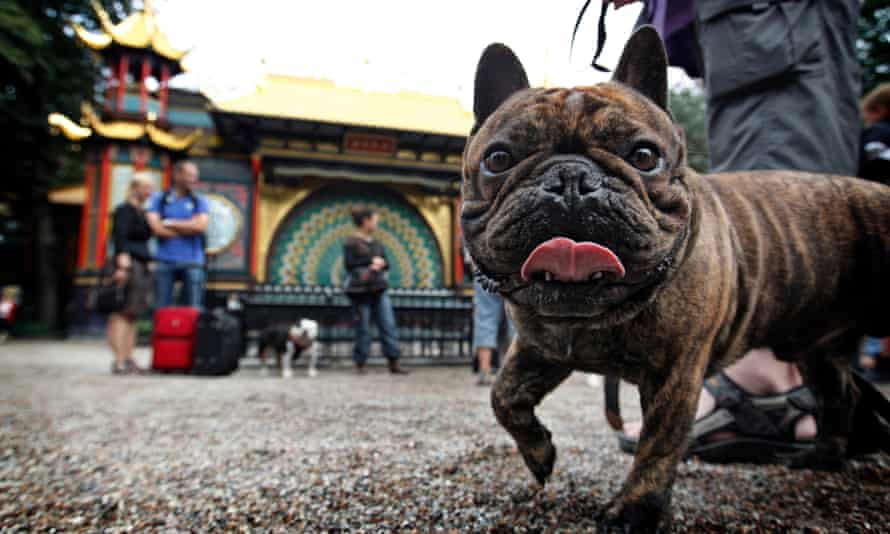 Dogs and their owners, in the Tivoli Gardens, in Copenhagen.