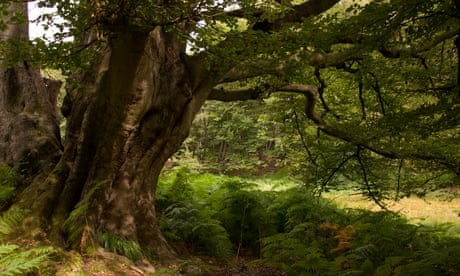 This tranquil bogland is not without its perils