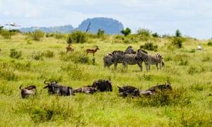 Stork, impala, blue wildebeest and plains zebra, Kruger national park.