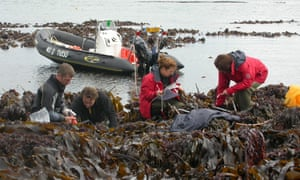 One of the Atlantic beds of kelp believed to have survived for 16,000 years.