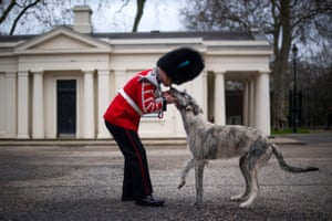 London, England. The Irish Guards' new canine regimental mascot and his handler