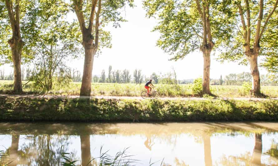 A cyclist rides past plane trees lining the Canal de la Robine in the south of France.