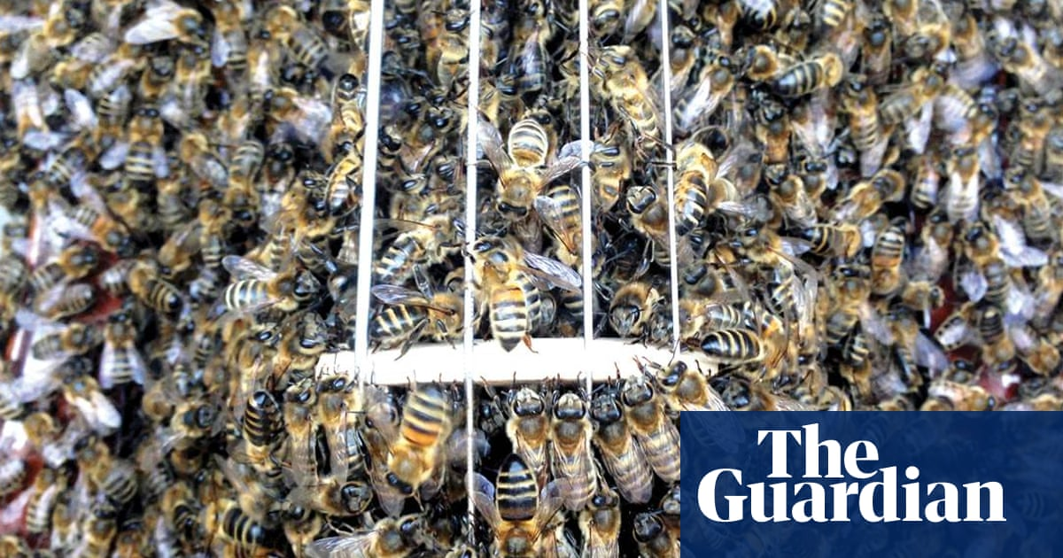 d58b7b298 Feel the buzz: the album recorded by 40,000 bees | Music | The Guardian
