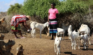 Josephine holds a goat as her mother Angela milks it