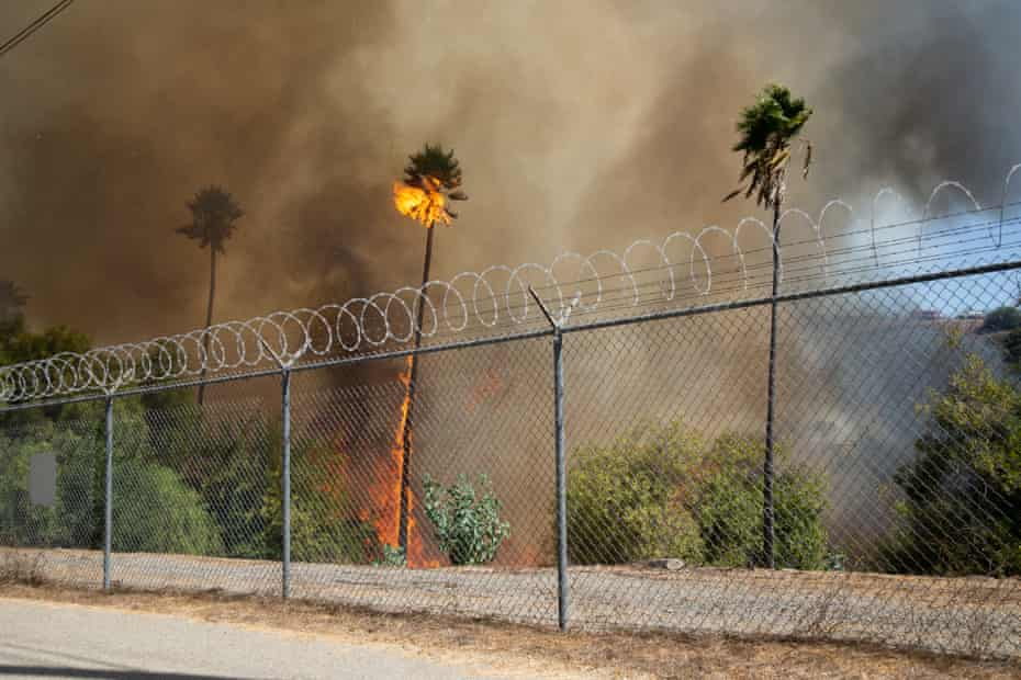 Palm trees burn in a fire burned about 40 acres in Los Angeles.