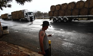 Truckers head off to their fodder drop-off points from Dunedoo