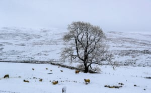 Snow covered trees at Newby Head, North Yorkshire