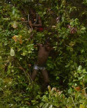 Young boys pick local, wild fruit off of trees on Orango Island. Trees are considered sacred in traditional Bijagos religion.