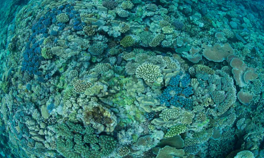 Healthy coral in Australia's Great Barrier Reef. Increasing the alkalinity of seawater flowing over a reef increases coral reef growth, new study shows.