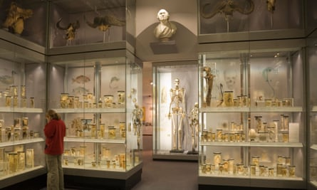 Charles Byrne's skeleton (centre) and other exhibits at the Hunterian Museum, London