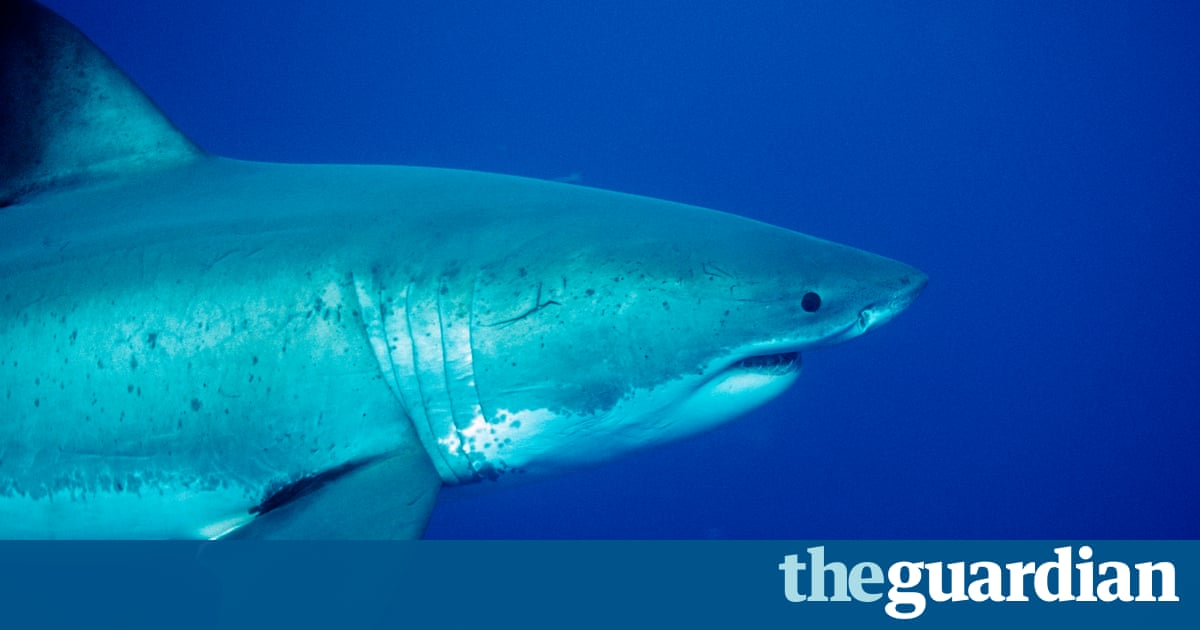 WA Shark Attack: Family 'heartbroken' After Teenage Surfer