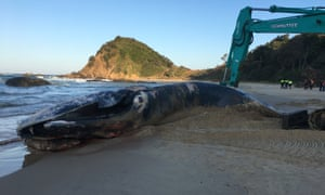 The beached whale
