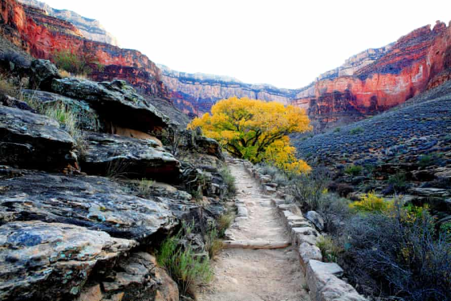Though Roosevelt's decision to protect the Grand Canyon was controversial at the time, it has since become one of the US's most iconic places.