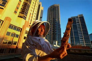 Apiarist Vicky Brown inspects a honeycomb cell from her hives at the Shangri-La Hotel in Sydney.
