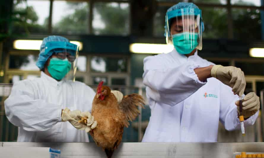Hygiene officials check poultry in Hong Hong.