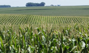 Crops suffering from lack of rainfall in Iowa, USA this month.