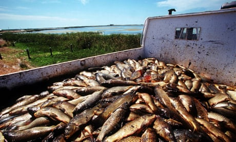 Australia's carp herpes plan dubbed 'serious risk to global food security'