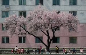 North Korean children near a cherry blossom tree in Pyongyang, North Korea