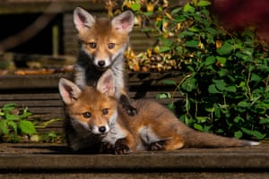 Cubs grappling on decking