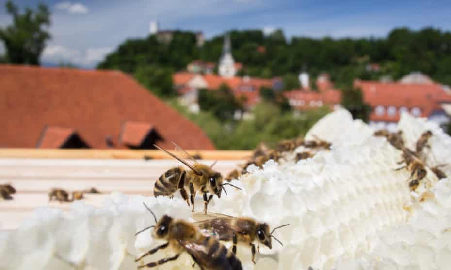 Bees on a honeycomb on the rooftop of the the Urban Planning Institute