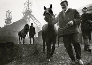 The last pit ponies at Wheldale colliery, Castleford, Yorkshire in 1972.