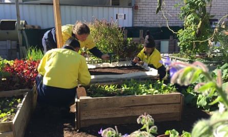 Green World Revolution workers, which cultivate microgreens, edible leaves, edible flowers, baby vegetables and cut herbs on 400 square metres of land in Perth