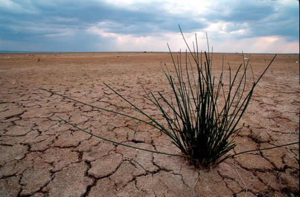 Parched land due to drought in the Sebkhra de Kelbia lagoon in Tunisia. Photograph: Michel Gunther/WWF