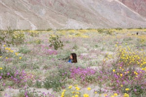 Visitors pose for photos amongst the wildflowers, Borrego Springs, California.