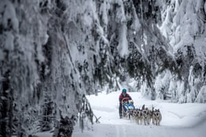 Dogs pulling a sled through a snowy landscape
