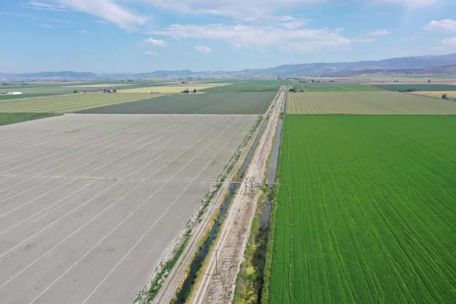 An aerial image shows a struggling onion crop next to a healthy mint field at Seus Family Farms in Tulelake, California.