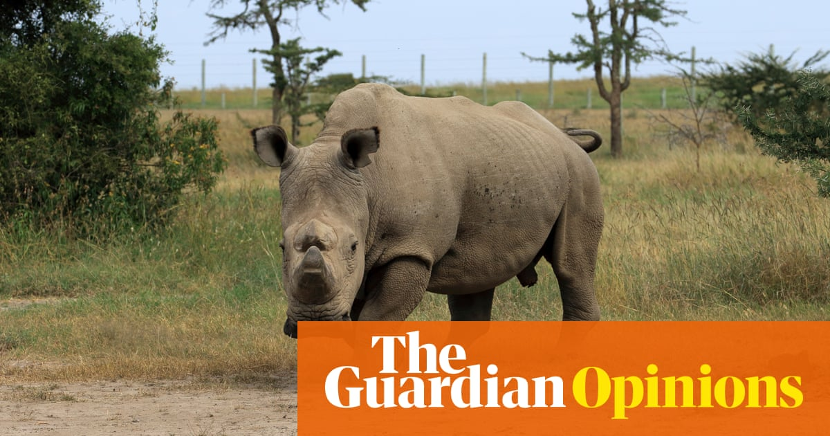 Sudan the rhino is dead. But his sperm could save the species | Helen  Pilcher | Opinion | The Guardian