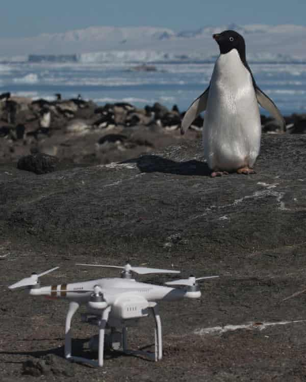 Penguin and drone on Danger Islands