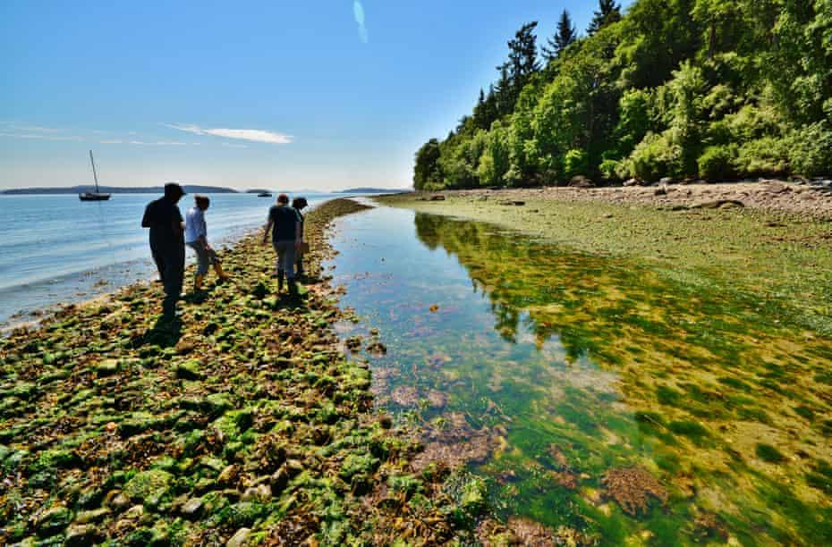 A British Columbia clam garden.