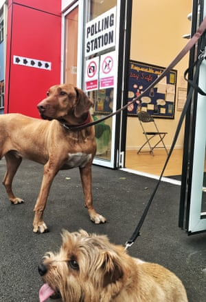 Dogs at a polling station
