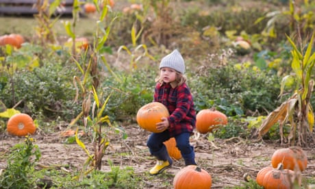 Pumpkin pickers and Egyptian mummies: Tuesday's best photos