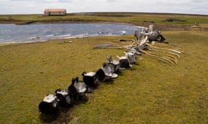 A whale skeleton on the island.