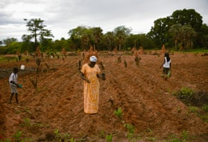 The Domingos family work in a farm in rural Guinea-Bissau.