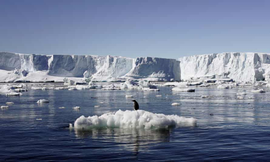 An Adelie penguin standing on a block of melting ice in East Antarctica.
