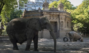 Elephants Pupi and Kuki in their enclosure at the zoo on 24 November 2016.