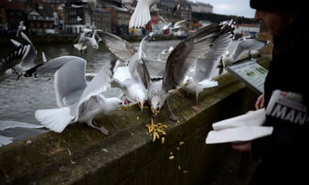 A man feeds gulls with leftover chips in Whitby, North Yorkshire.