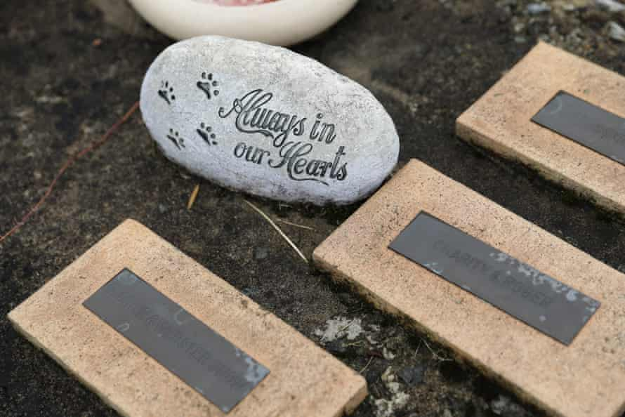 gravestones for pets lie on the ground