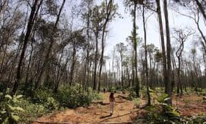 Deforestation in Mato Grosso State, Brazil.