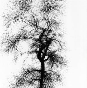 Harry Callahan's classic multiple exposure of a tree creates an implied sense of time and motion, defying the concept of a photo as a means to capture a singular moment in time, or even of the apparent solidity of a tree