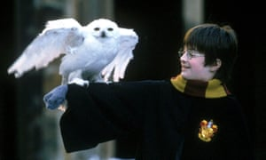 daniel radcliffe as harry potter with an owl