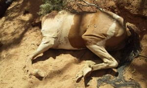 A horse that died at the dried up Apwerte Uyerreme waterhole