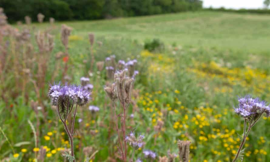 Field margins and areas of scrubland can be rich ecological niches, that also provide corridors for wildlife